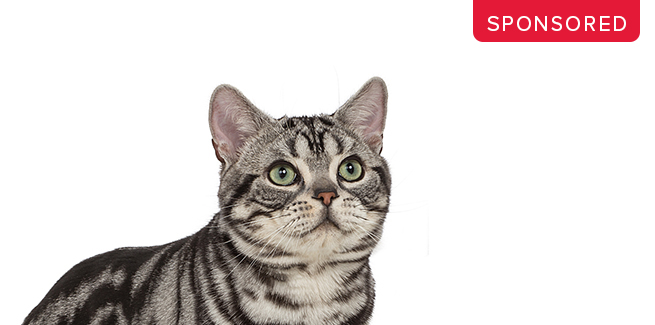 RoyalCanin_Jul20_Blog.jpg