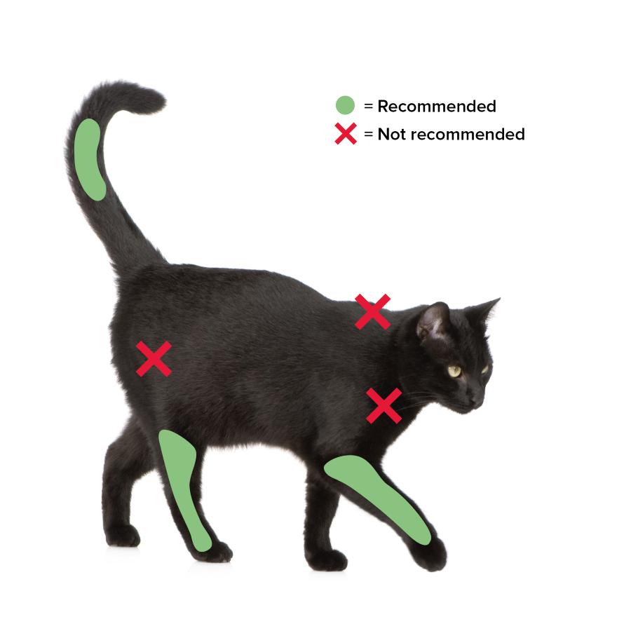 Update On Feline Injection Site Sarcomas