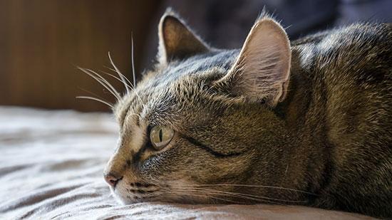 Feline Infectious Peritonitis Reversed