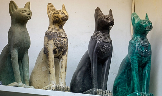 Egyptians could have helped spread cats across the ancient world