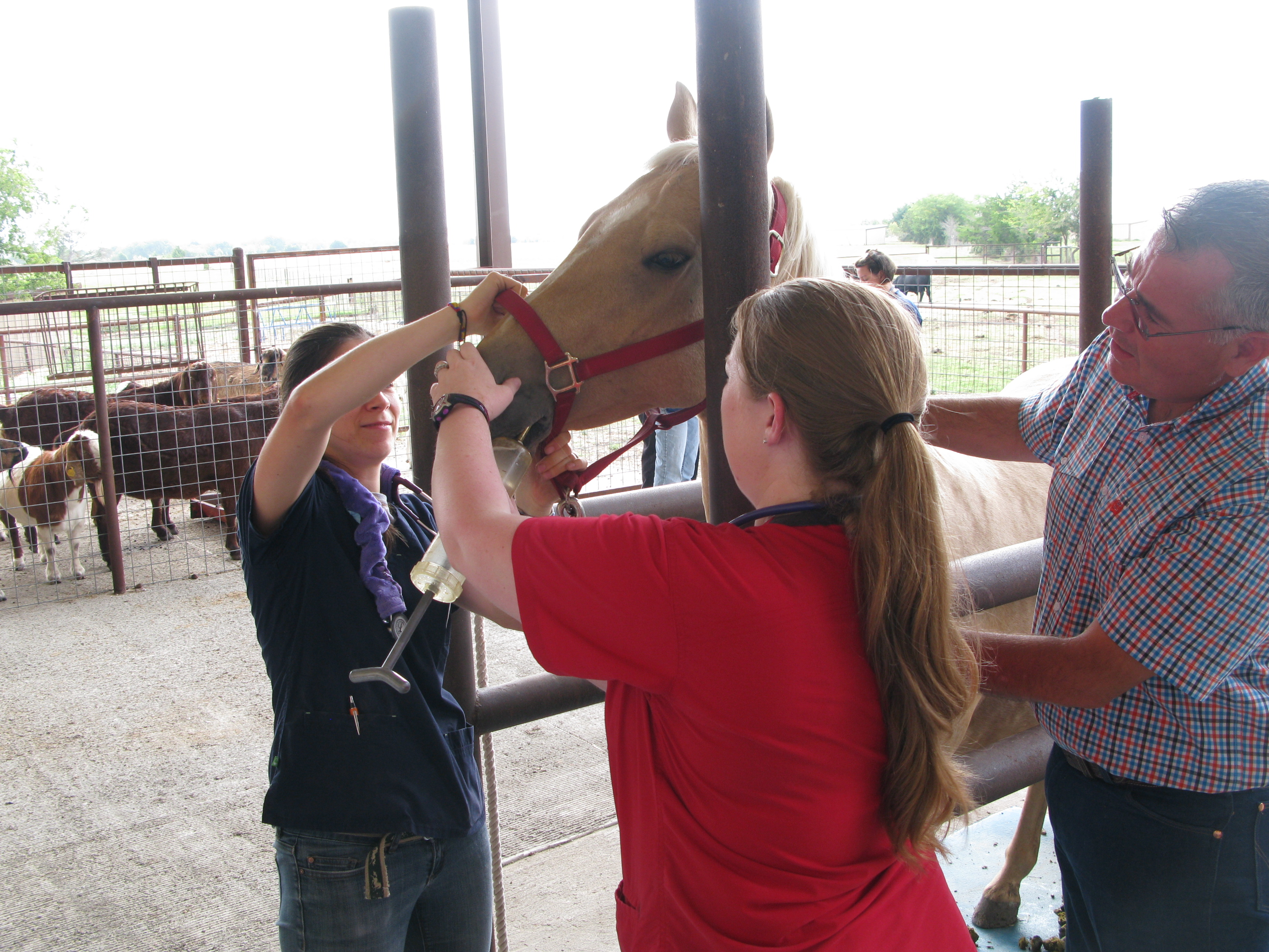 Horse and feeding tube - large animal lab