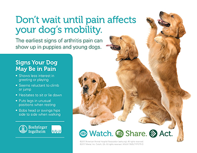 MobilityMatters_Poster_Dog.jpg